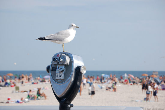 Seagull Overlooking Beach